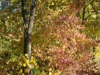 Wie du die Blätter golden färbst,