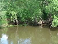 Uferlandschaft I