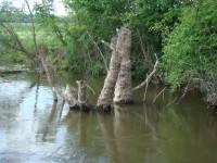 Uferlandschaft III