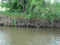 Uferlandschaft V