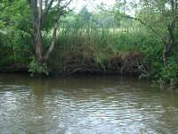 Uferlandschaft VI