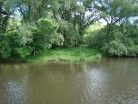 Uferlandschaft VII
