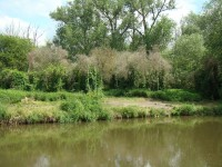 Uferlandschaft VIII