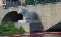 Kröllwitzer Brücke - die Kuh