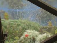 Studie Spinnennetz
