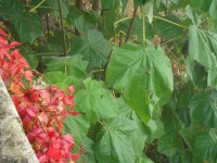 Exotische Pflanze