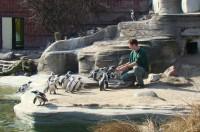 Pinguinfelsen