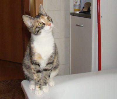 Das ist Mimi, sie war eben bei uns eingezogen
